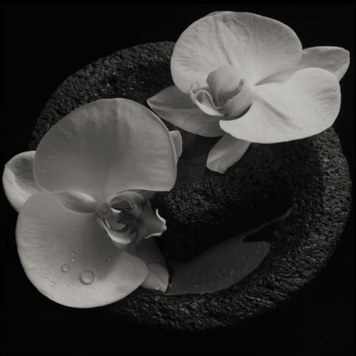 Corpse Flower (LP)